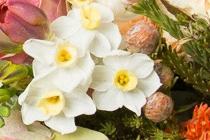 Encyclopedie Des Fleurs Composant Les Bouquets De Flower